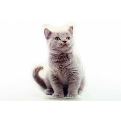 Obrázek Polštářek 32 x 25 cm šedé kotě