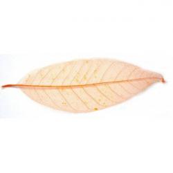 Obrázek Listy magnólia, farebný - 10 ks, o veľkosti 20 cm - oranžový