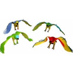 Obrázek papoušci 4 druhy