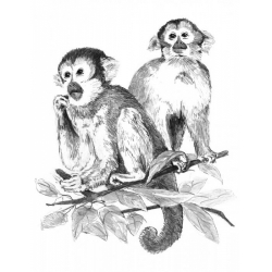 Obrázek Malování SKICOVACÍMI TUŽKAMI- Opičky