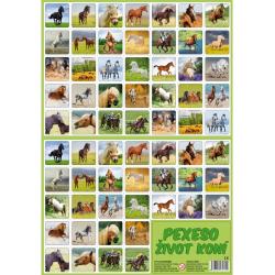 Obrázek Pexeso Život koní