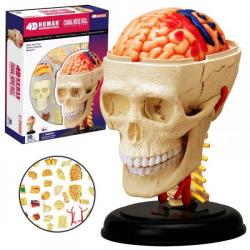 Obrázek Anatomie člověka - lebka