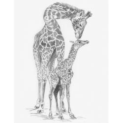 Obrázek Maľovanie SKICOVACÍMI TUŽKAMI- Žirafa s mláďaťom
