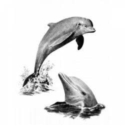 Obrázek Malování SKICOVACÍMI TUŽKAMI-Delfíni - SKBN*19