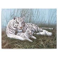 Obrázek Malování podle čísel- Bílý tygr s mládětem