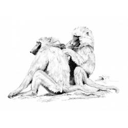 Obrázek Malování SKICOVACÍMI TUŽKAMI - Paviány