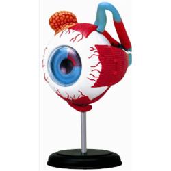 Obrázek Anatomie člověka - oko