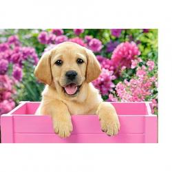 Obrázek Puzzle 300 dílků - Labrador v růžovém boxu