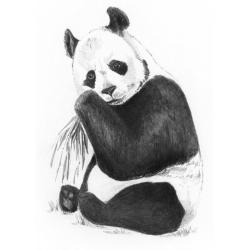 Obrázek Malování SKICOVACÍMI TUŽKAMI-Panda