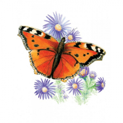 Obrázek ROYAL and LANGNICKEL Sada malování pastelkami - motýli