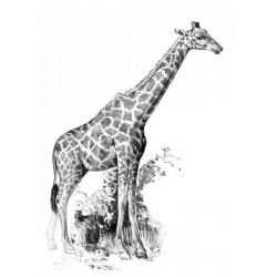 Obrázek Malování SKICOVACÍMI TUŽKAMI-Žirafa