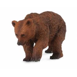 Obrázek Medvěd hnědý - mládě