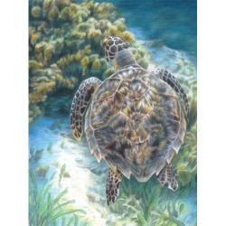 Obrázek Malování podle čísel PASTELKAMI - Mořská želva