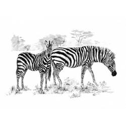 Obrázek Malování SKICOVACÍMI TUŽKAMI - Zebry