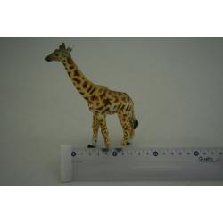 Obrázek Žirafa
