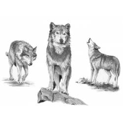 Obrázek Malování SKICOVACÍMI TUŽKAMI - Vlk