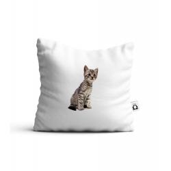 Obrázek Polstář Kotě